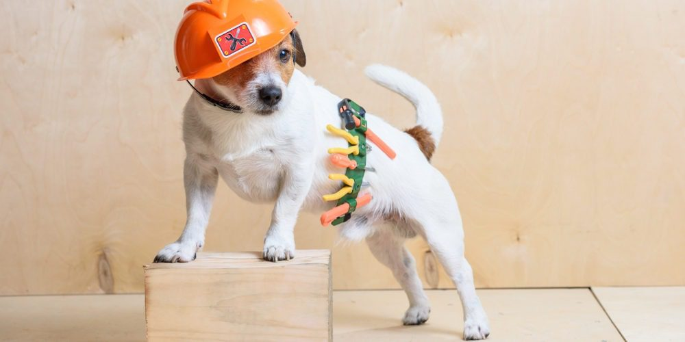 dog in construction gear