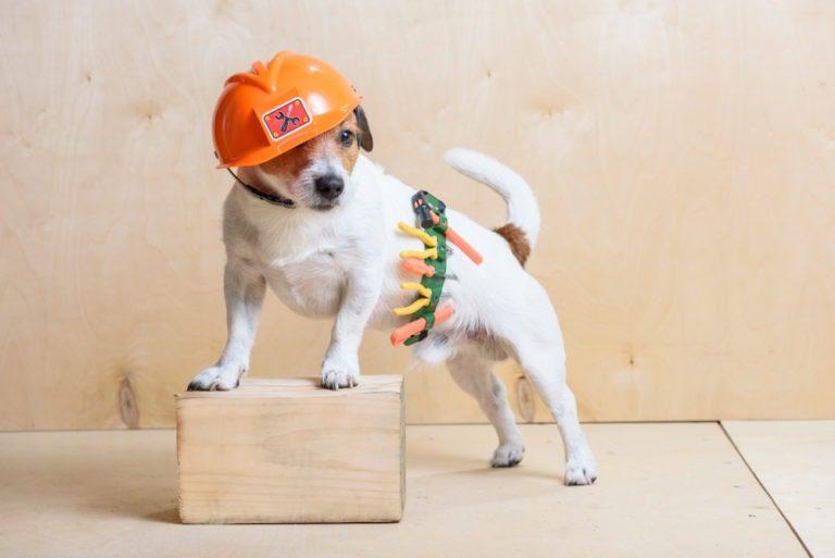 dog in construction gear